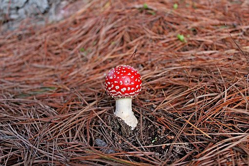 Fungus, Forest, Mushroom, Nature, Natural, Season