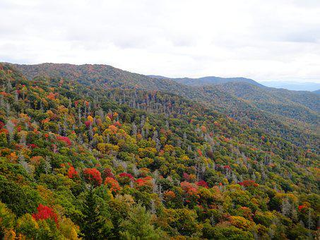 Indian Summer, Great Smoky Mountains, Autumn, Forest