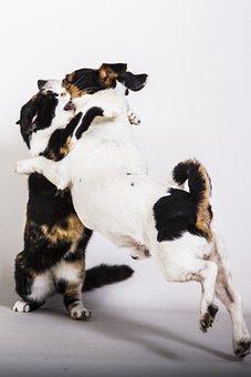 Dierenhond And Cat, Quarrel, Love