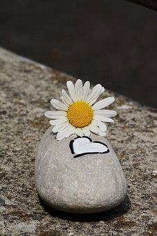 Stone, Marguerite, Heart, Symbol, Blossom, Bloom