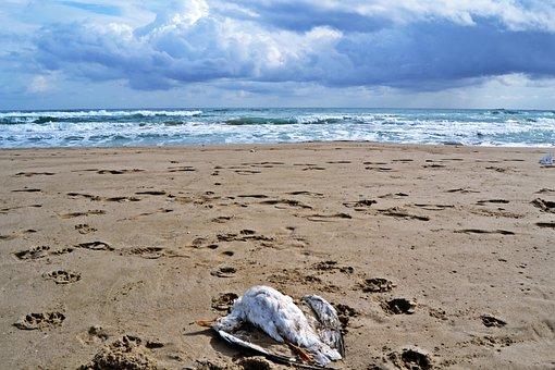 Mediterranean, Beach, Seagull, Life, Nature, Waves