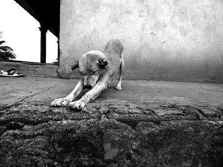 Old Age, Dog, Doggie, Domestic Animal, Animal
