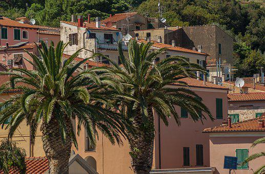 Italy, Rio Marina, Island Of Elba, Palm Trees