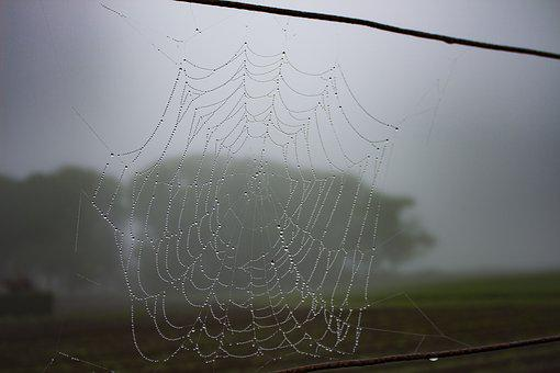 Spiderweb, Dew, Rain, Drops, Nature, Spider, Morning
