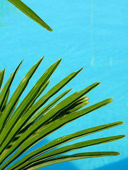 Water, Swimming Pool, Pool, Holiday, Swim, Blue, Summer