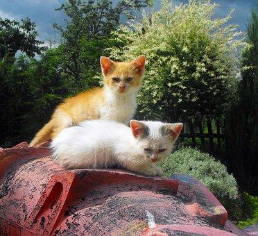 Kittens, Cats, Chicks, Ryšavá, White, Cat Home