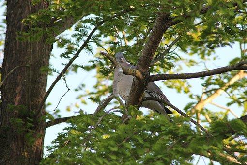 Dove, Wood, Bird, Have, Natural, Summer, Denmark