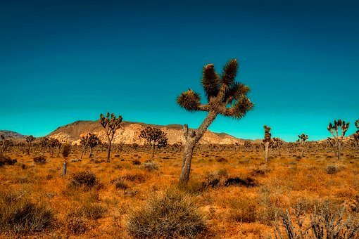 California, Mountains, Desert, Trees, Barren, Hot, Dry