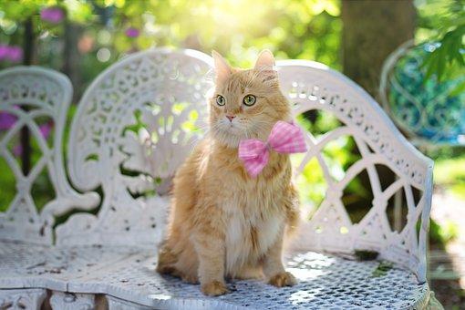 Cat, Kitty, Feline, Summer, Sunshine, Pet, Animal, Cute