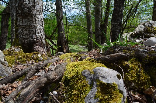 Moss, Forest, Into The Woods, Mountain, Walk