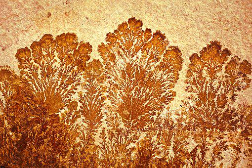 Stone, Fossil, Dendrites, Petrified, Petrification