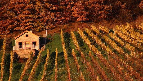Vineyard, Vineyard Cottage, Forest, Red
