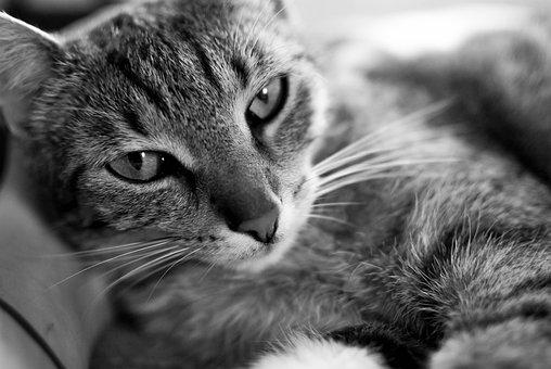 Cat, Kitten, Animal, Pet, Futrzak, Domestic Cat
