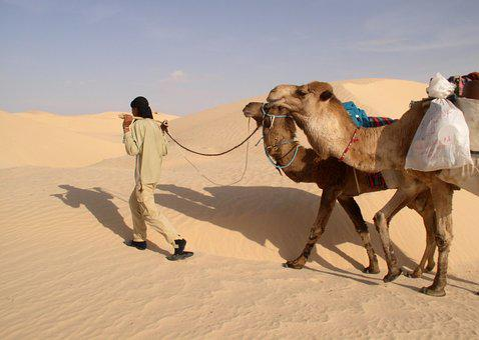 Sahara, Camels, Guide, Turban, Dunes, Sand, Desert