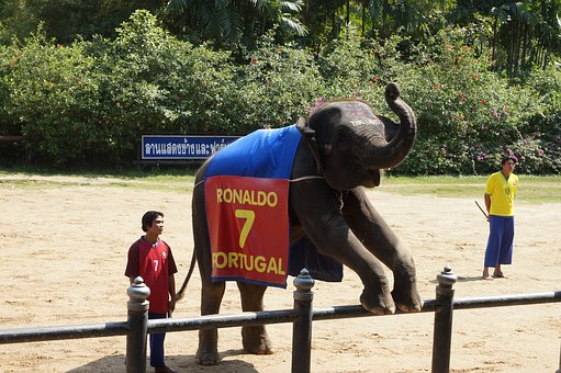 Thailand, Packages, Elephant