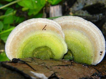 Mushroom, Garden, Tree Trunk, Fungus, Wood, Wet, Nature