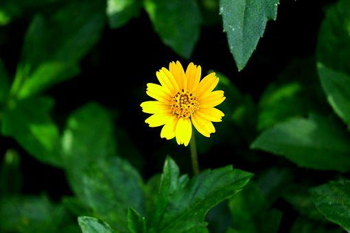 Flower, Yellow, Blue Sky, Summer, Color