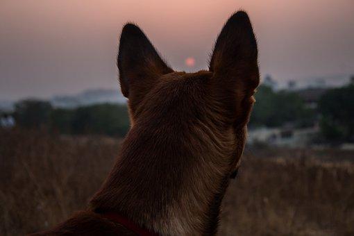 Dog, Pet, Animal, Canine, Domestic, Mammal, Puppy
