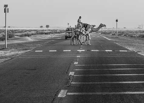 Camels, Road, Desert, Animal, Arab, Way, Transportation