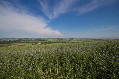 Summer, Field, Sky, Blue, Panorama, Grasses, Sun