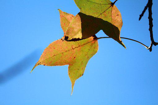 Rather Critical, Blue Sky, Yellow Leaves, Boom-and-bust