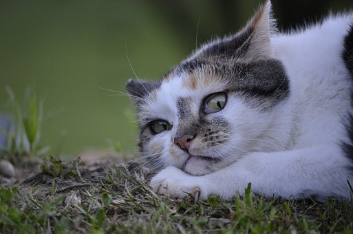 Cat, Lurking, Nature, Summer, Funny