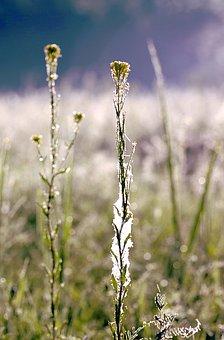 Grass, Cobweb, Rosa, Dawn, In The Morning, Nature