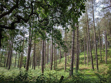 Cannock Chase, Countryside, Trees, Outdoor, Landscape