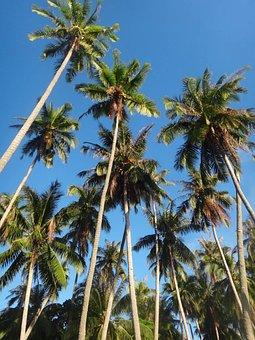 Horse Island, Coconut Trees, Woods