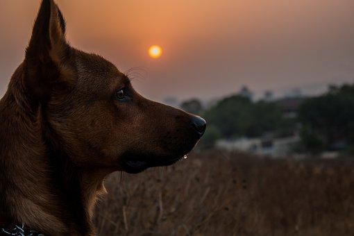 Dog, Pet, Animal, Cute, Canine, Domestic, Mammal, Puppy