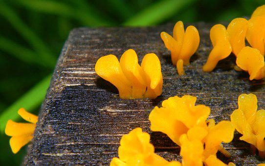 Fungus, Wood, Wet, Mushroom, Nature, Natural, Wooden