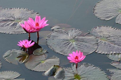 Flower, Kwai, River