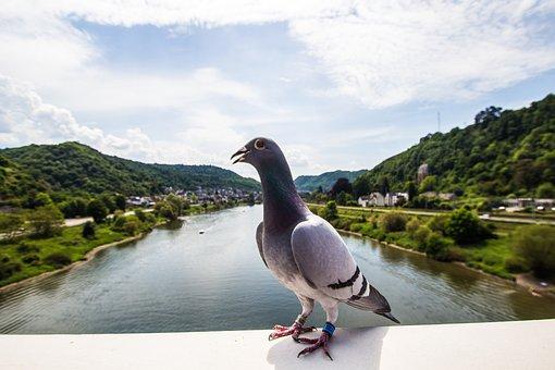 Dove, Mosel, Wine, Landscape, Sachsen, Germany, River