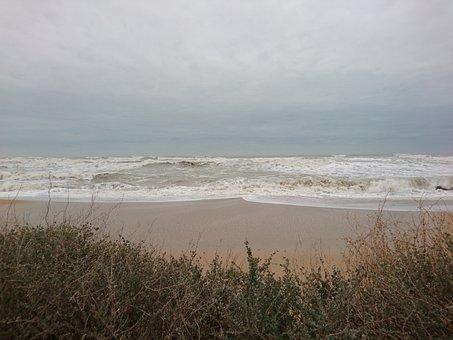 Sea, Beach, Sky, Plants, Shore, Summer, Ocean, Coast