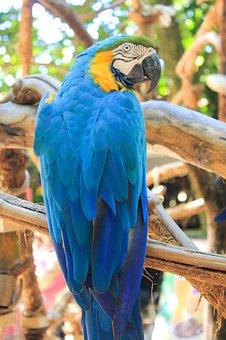 Ararara, Bird, Brazilian Fauna