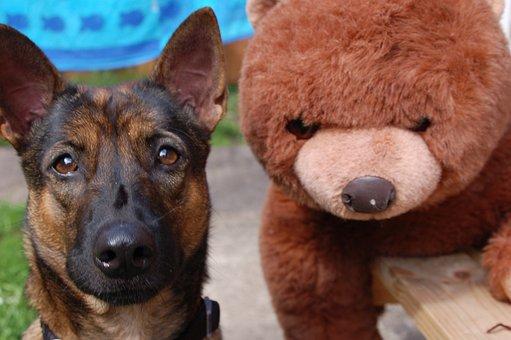 Dog, Bear, Cuddly Toy, Plush Toy, Best Friends, Animal
