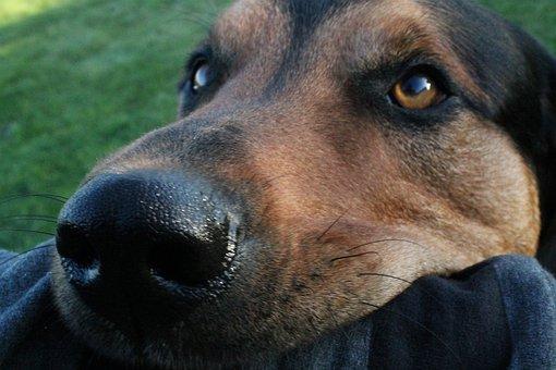 Dog, Bite, Playful, Pathetic, Cute, Garden, Close Up