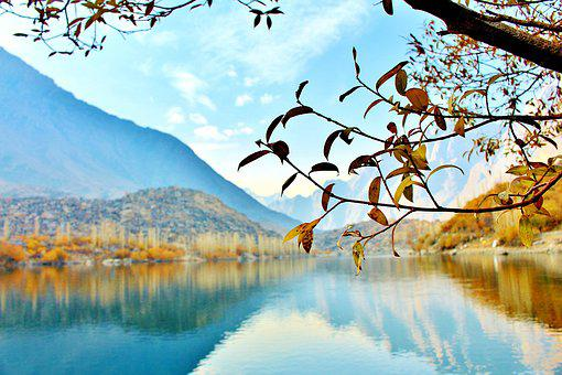 Tree, Lake, Pakistan, Nature, Landscape, Forest, Travel