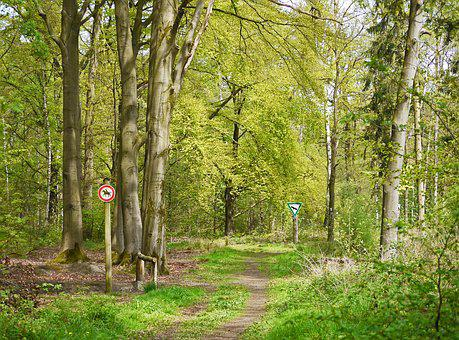 Nature Reserve, Forest, Spring, May, May Green