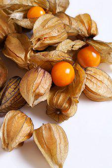 Physalis, Small, Edible, Fruit, South America