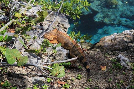 Lizard, Lagoon, Tree