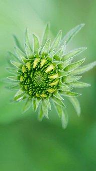 Flower, Naturel Flower, Green