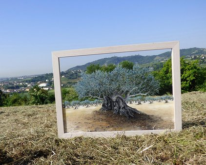 Olivo, Carlo Busellato, Olea Tree