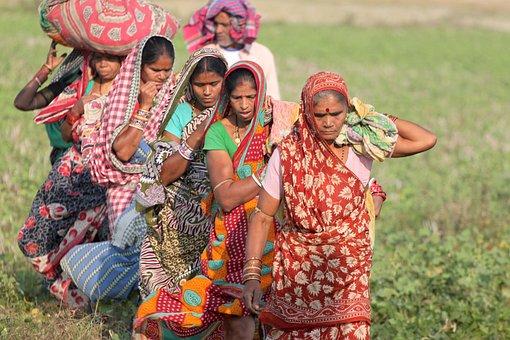 Odisha, Orissa, India, Tribal, Tribe, Harvest