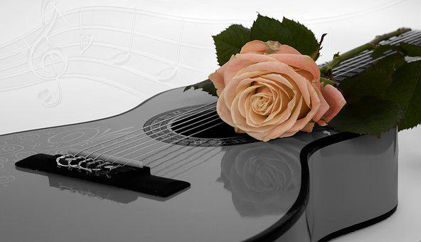 Guitar, Rose, Apricot, Coupon, Music, Black And White