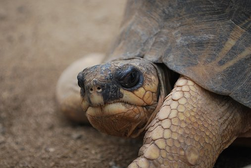 Turtle, Face, Close, Head, Big, Giant, Profile