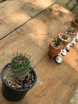 Cactus, For All Skin Types, Wood