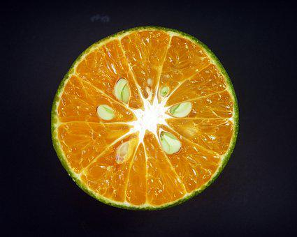 Orange, Fruit, Slice, White, Citrus, Sour, Isolated