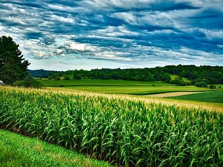 Wisconsin, Corn, Soybeans, Landscape, Sky, Clouds