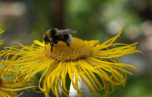 Bee, Garden, Blossom, Bloom, Nature, Flower, Summer